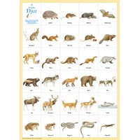 Poster 29 Swedish animals