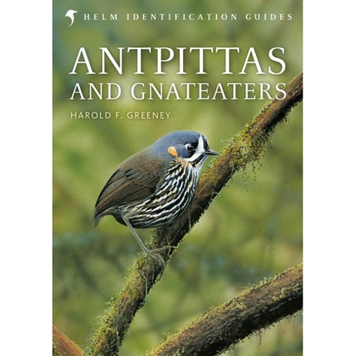 Antpittas and Gnateaters (Greeney)